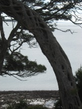 The moonah trees have unusual trunks. They look almost as if they are plaited stone.
