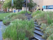 The grasses are arranged on the steps leading up to the front of the library