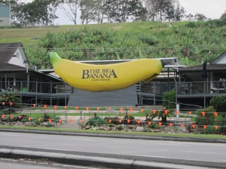My motel was beside the Big Banana on the Pacific Highway. Sadly, this 'Big Thing' didn't seem so big anymore